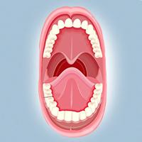 пластика уздечки губ и языка